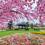 Vườn Nhật Bản – Vinhomes Smart City Tây Mỗ, Hà Nội